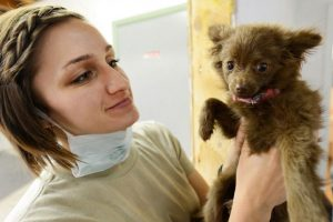 Getting your pet vaccinated